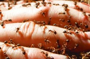 Controlling Fire Ants -- What Works, What Doesn't