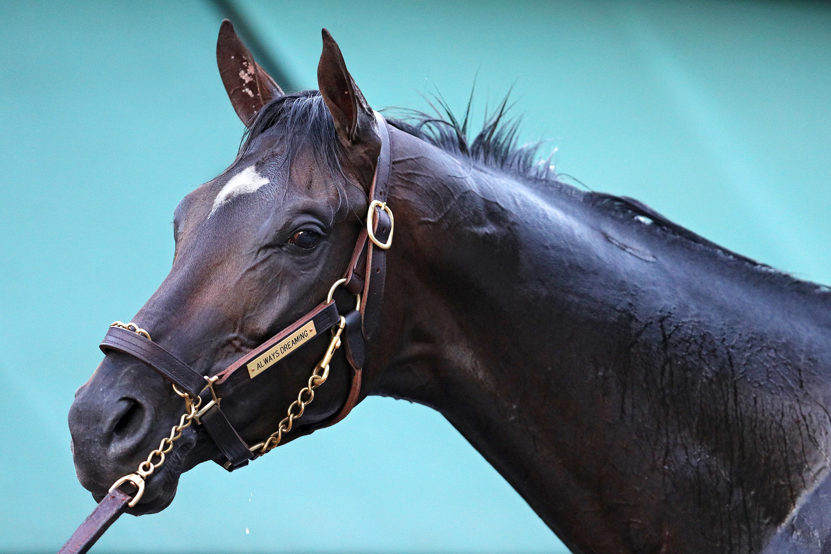 What Happens After the Kentucky Derby? Where the Past 5 Big Race Winners Are Now