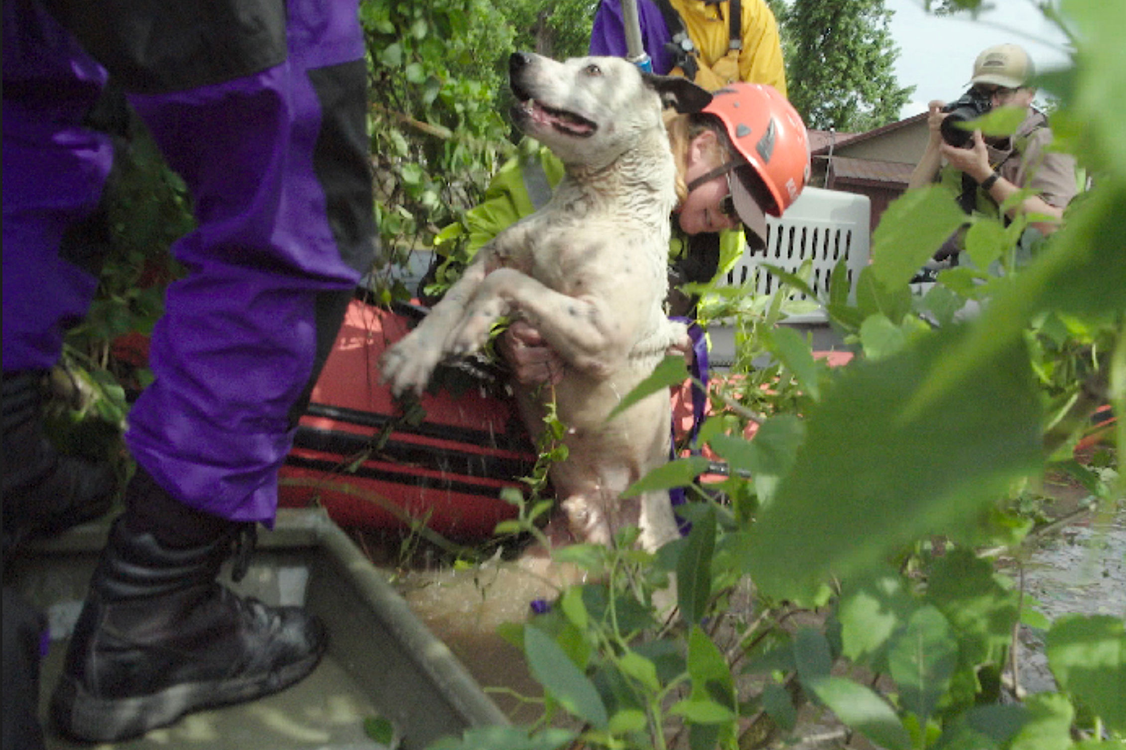 Rescuers Brave Oklahoma Floods to Save Dog 'Clinging for Life' to Tree Stuck in 12-Ft. of Water
