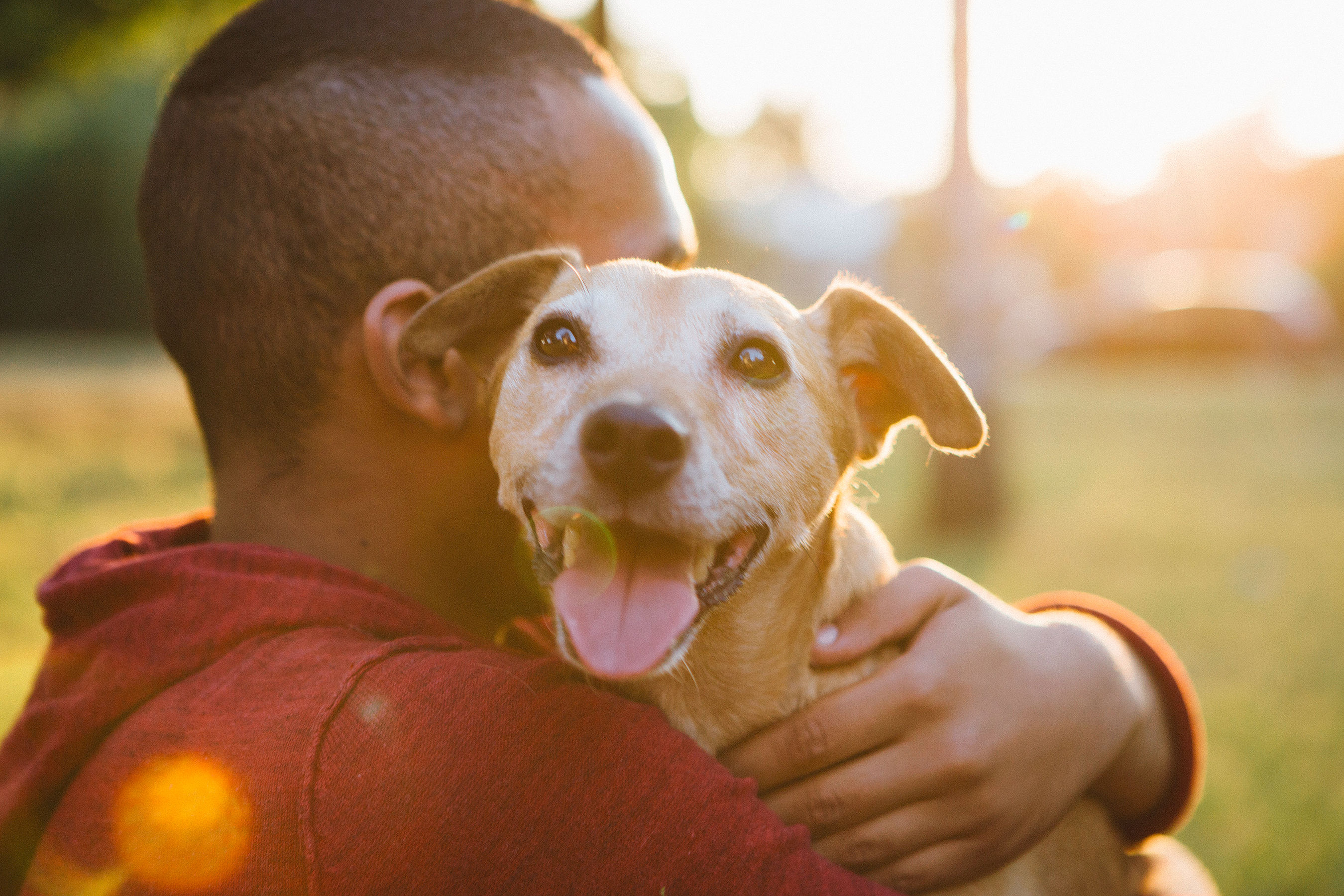 Over 70 Percent of Dog Owners Admit They Prefer Spending Time with Their Pets over Other People