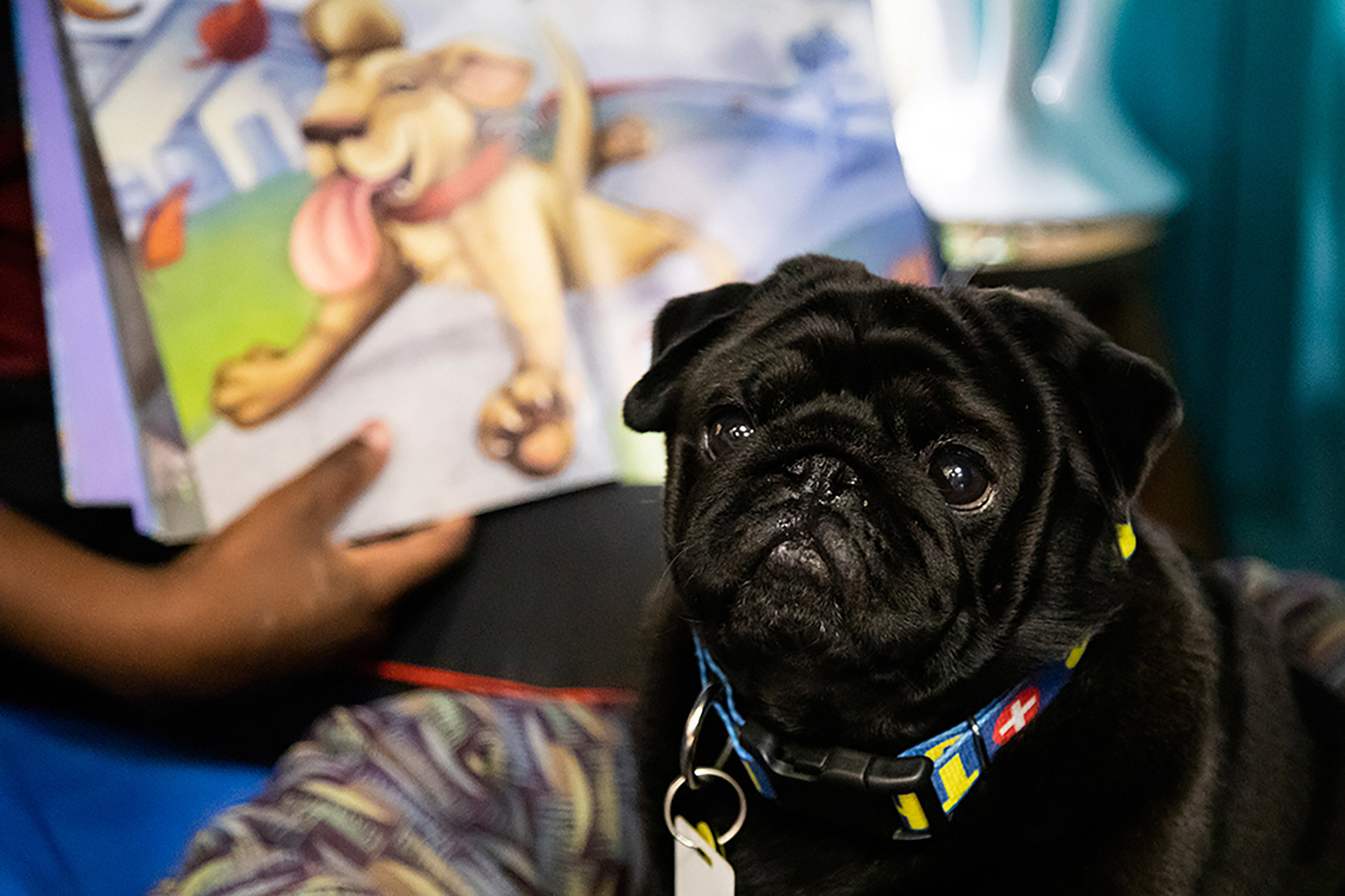 Georgia Students Improving Reading Skills with Help from Adorable Doggy Teacher Mr. Booker T. Pug