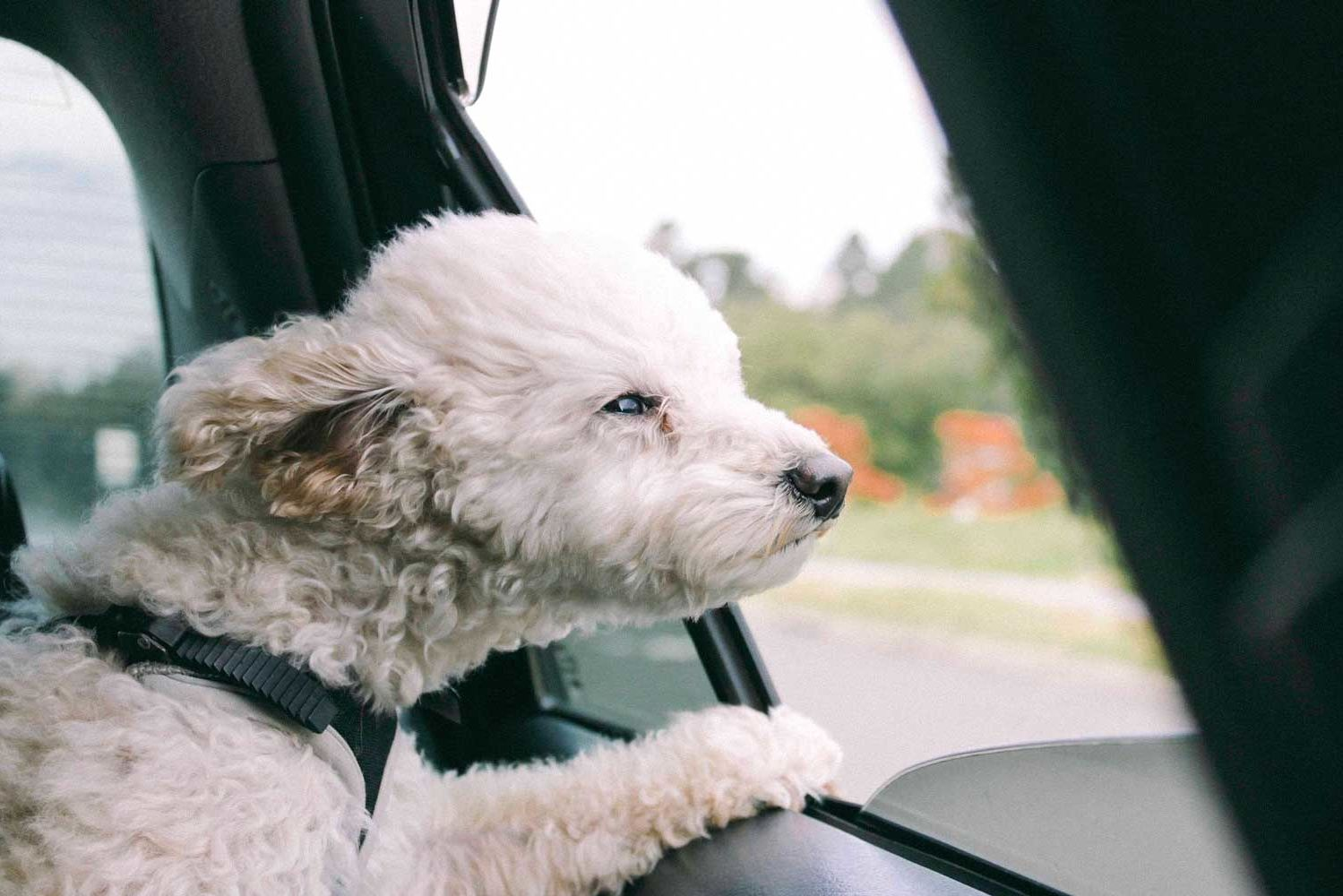How to Keep Your Dog From Getting Car Sick —and What to Do If It Happens