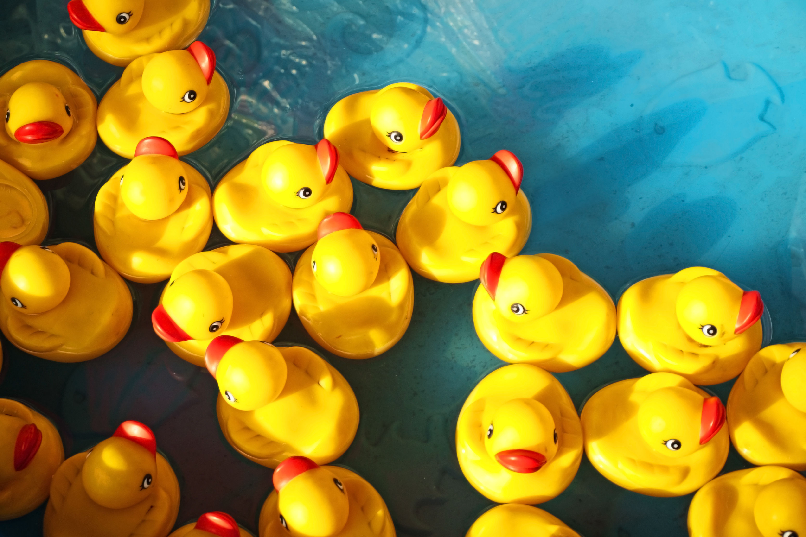 The Adorable Rubber Ducky Is Actually a Haven for Nasty Bacteria, Scientists Say