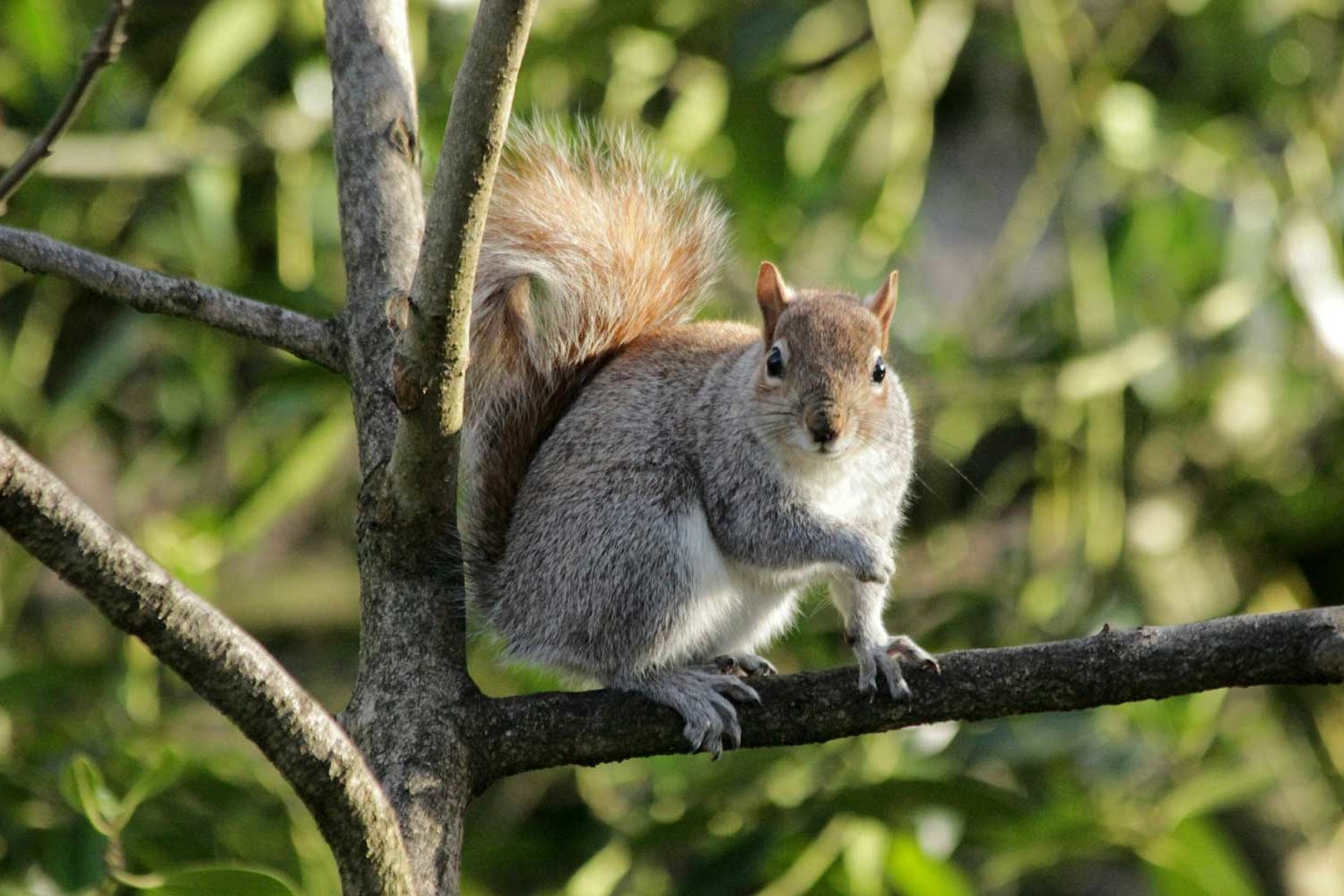 A Mischievous Squirrel Caused a Huge Power Outage at a Florida Theme Park