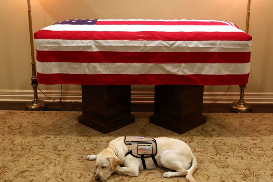 George H.W. Bush's Dog Sully Pictured Lying Next Next to His Coffin
