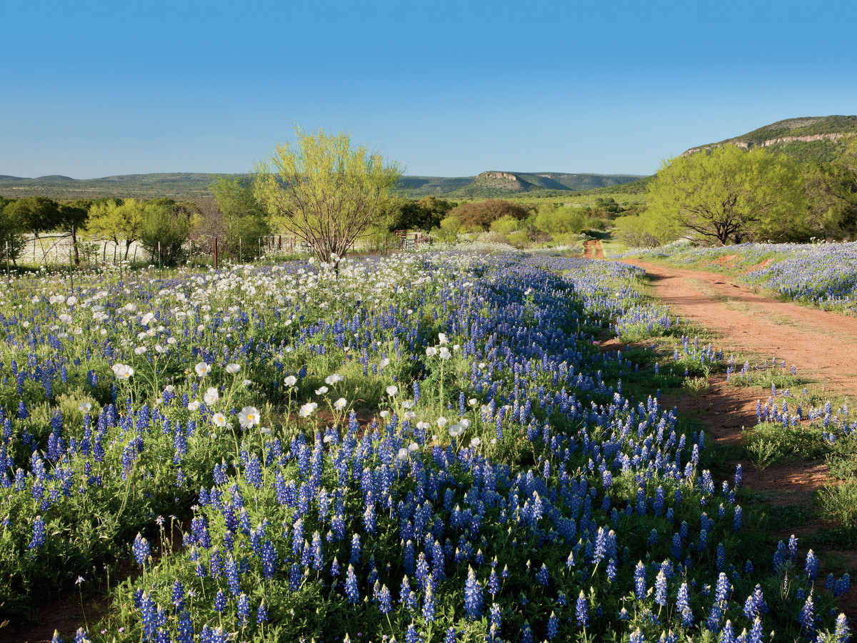 Swim in Texas Bluebonnets