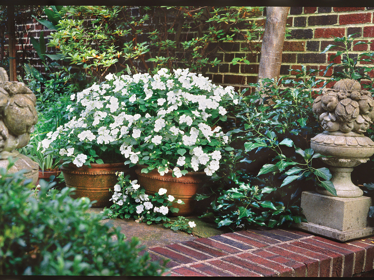 Impatiens how to grow these annual flowers southern living impatiens are easy to grow and fast blooming flowers mightylinksfo