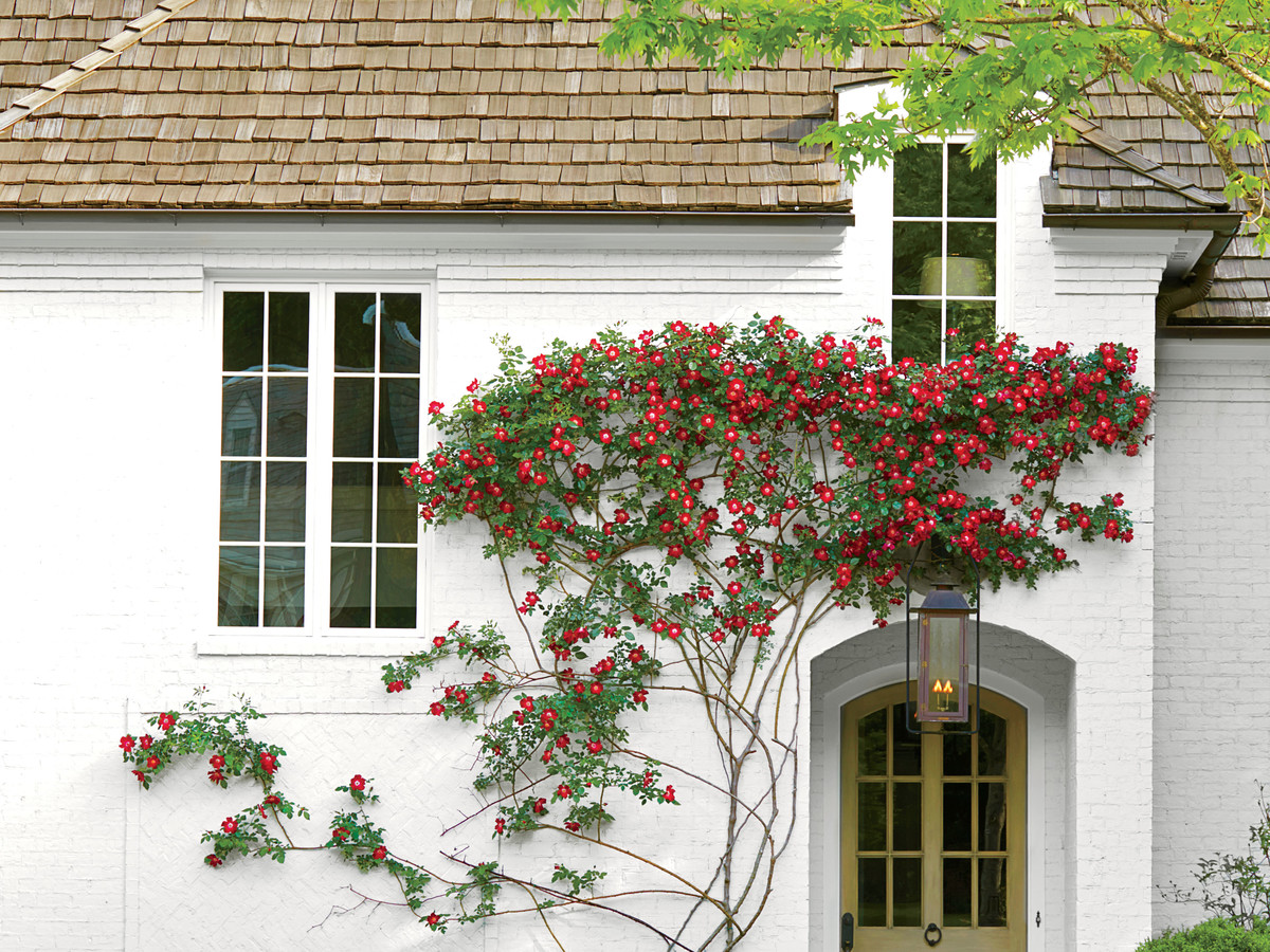 Fast Growing Vines & Climbing Plants - Southern Living