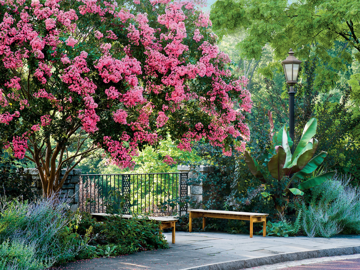 Crepe Myrtle Growing Guide - Southern Living