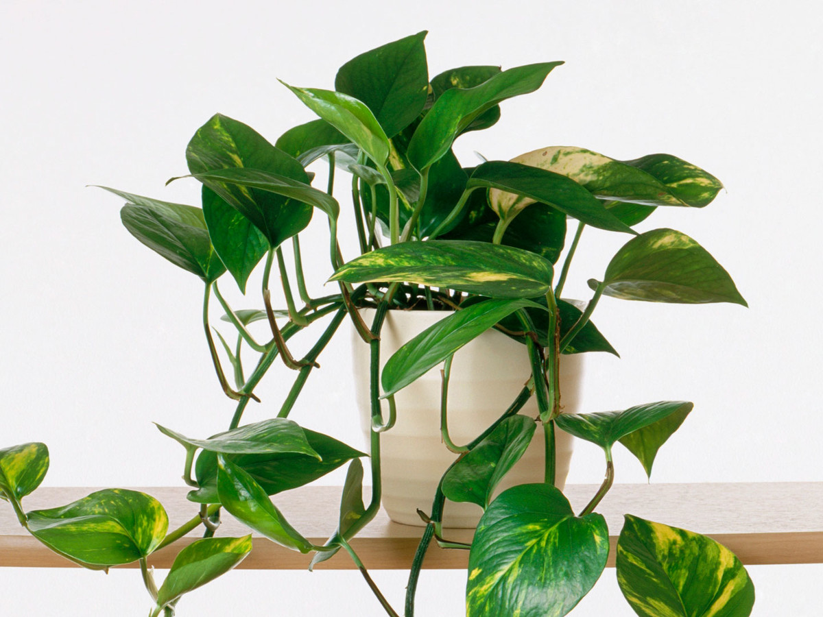 Growing Indoor Plants Image