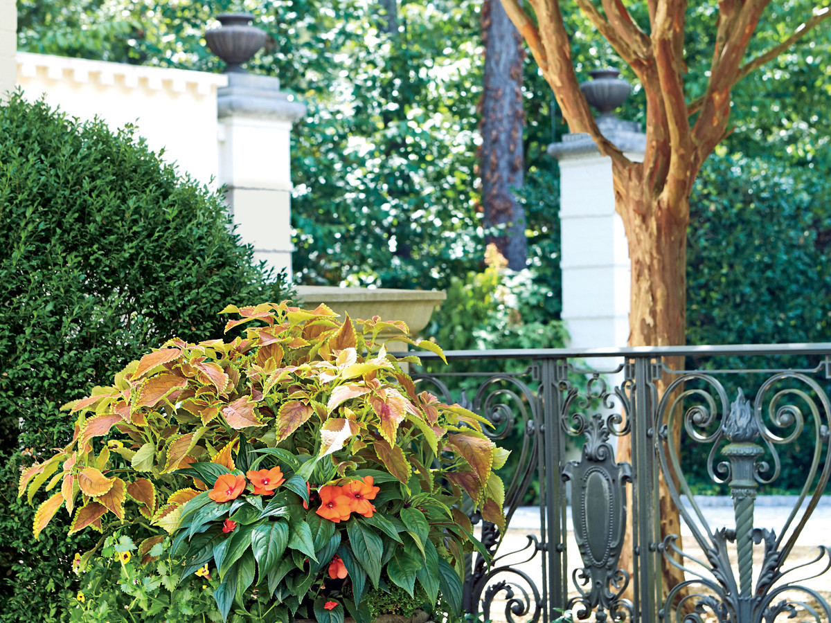 Gardening Ideas Amp Tips Southern Living