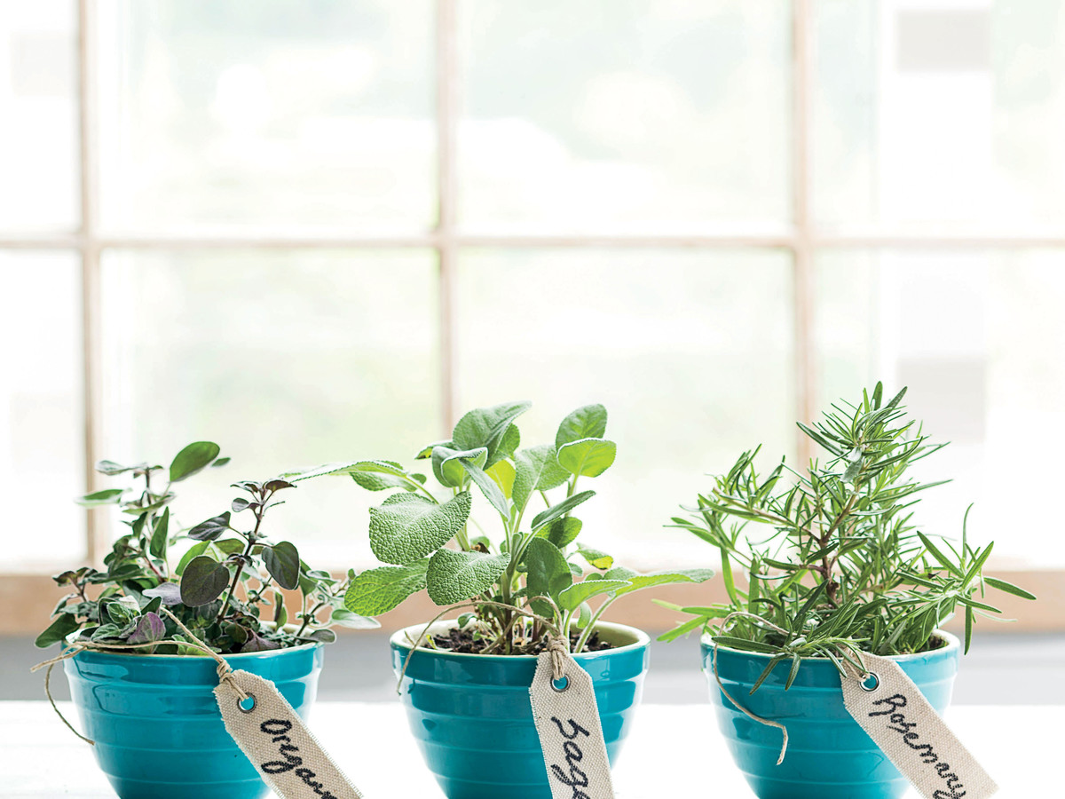 The Perfect Plants for Beginner Gardeners - Southern Living