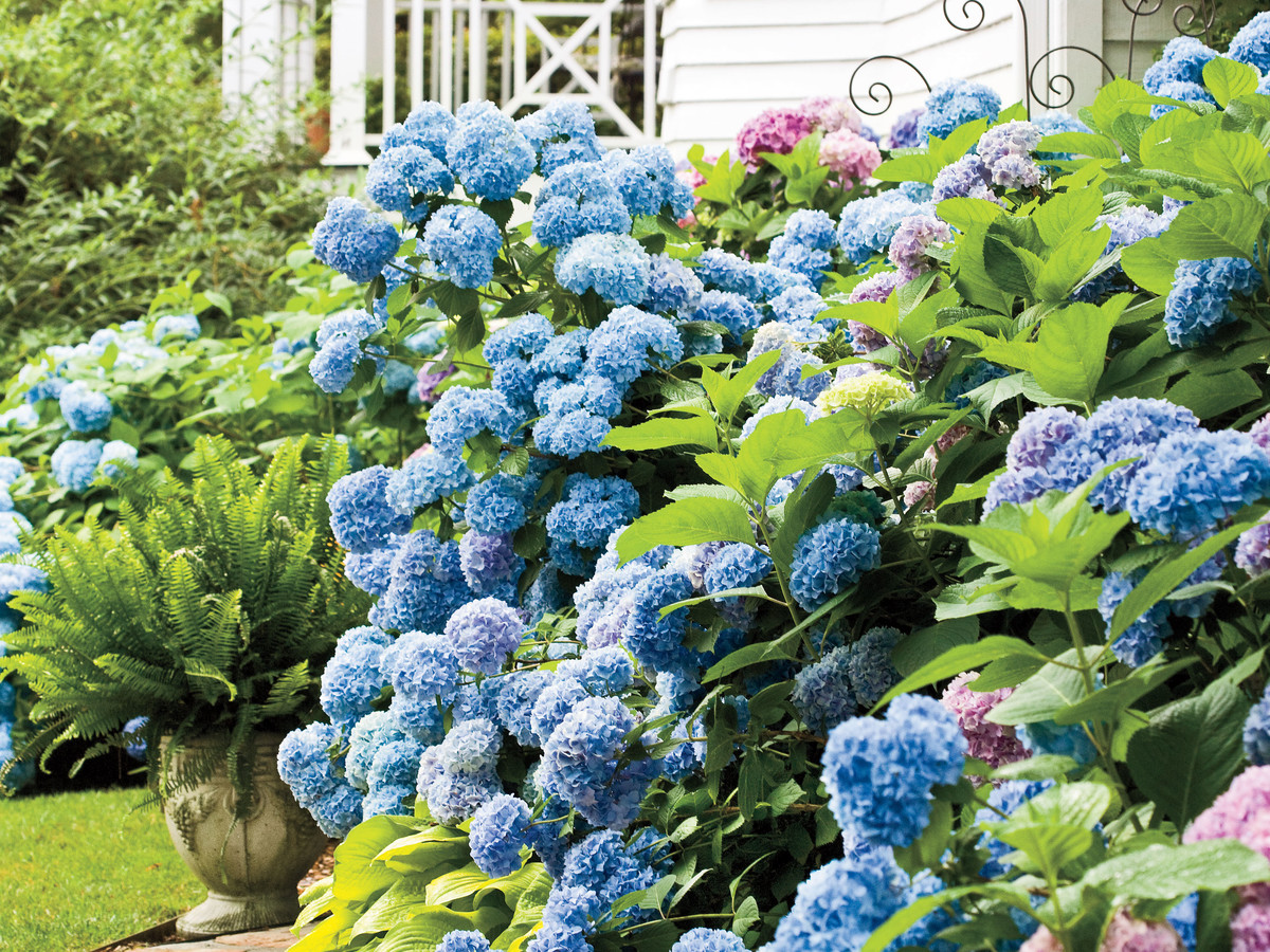 The Best Companion Plants For Hydrangeas - Southern Living