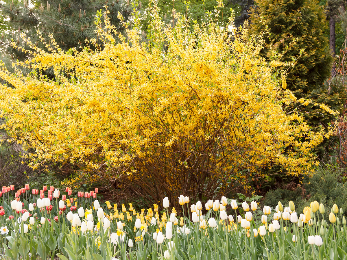 Banish Winter With This February Garden Checklist Southern Living
