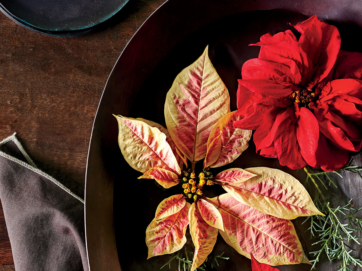 Floating Poinsettia Blooms in Bowl