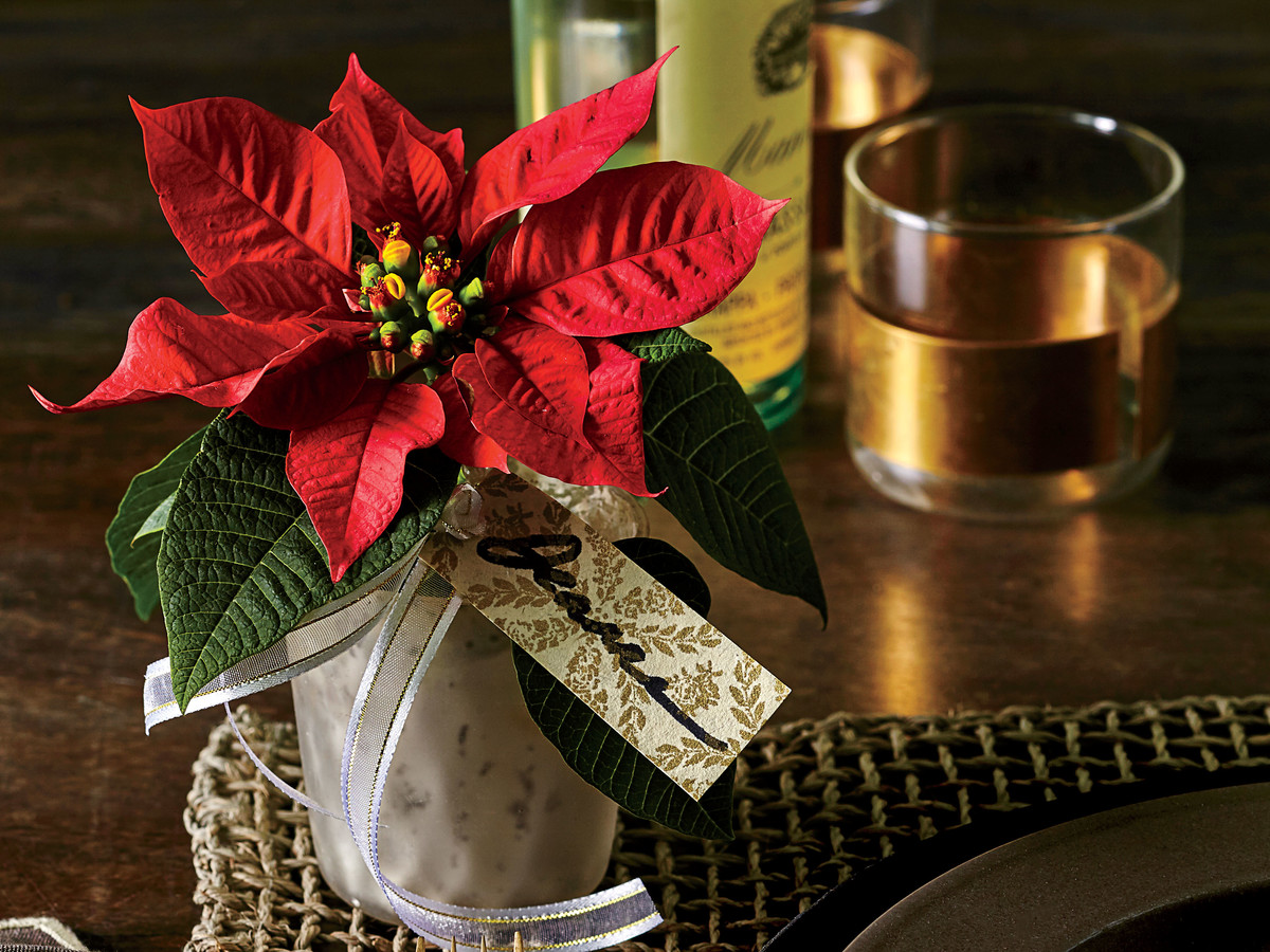 Personal Poinsettia Party Favor