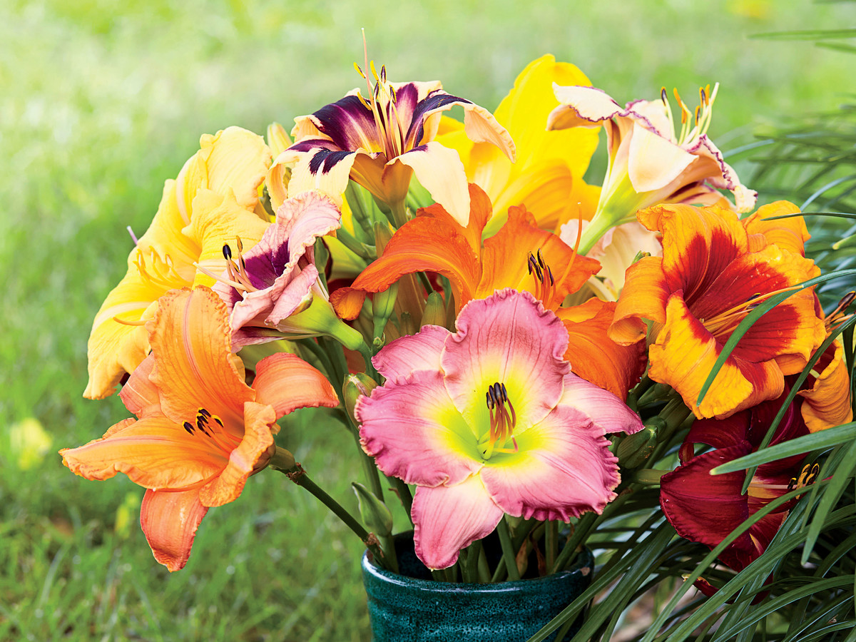 Vase of Various Daylilies