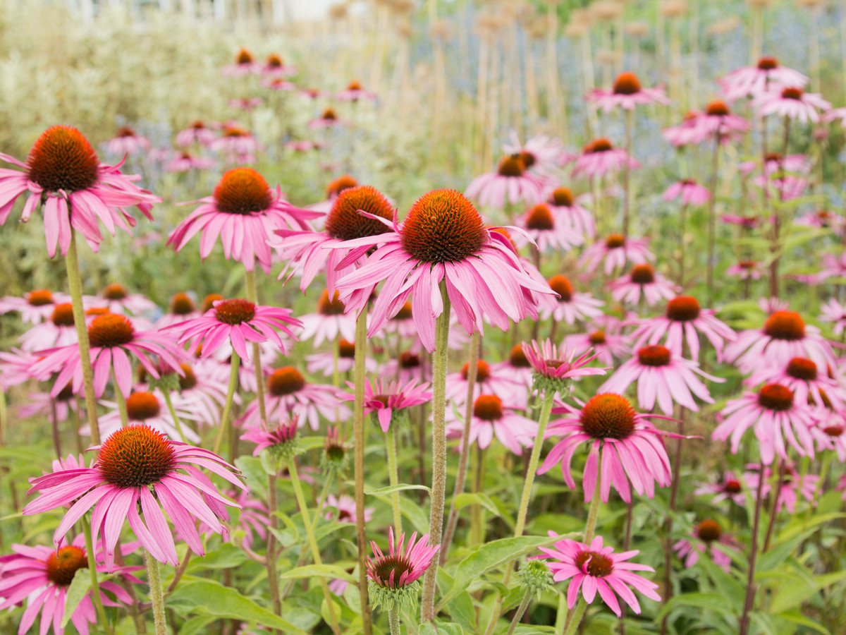 Low Maintenance Perennials For Your Southern Garden Southern Living