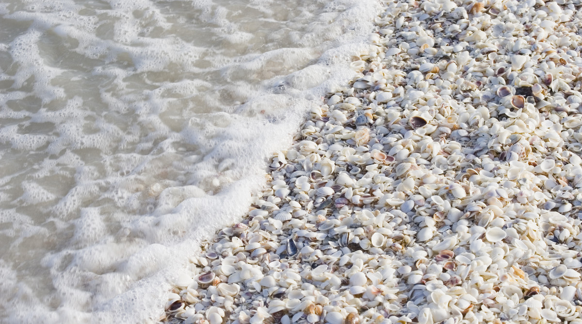 Shells and Ocean on Sanibel Island, Florida