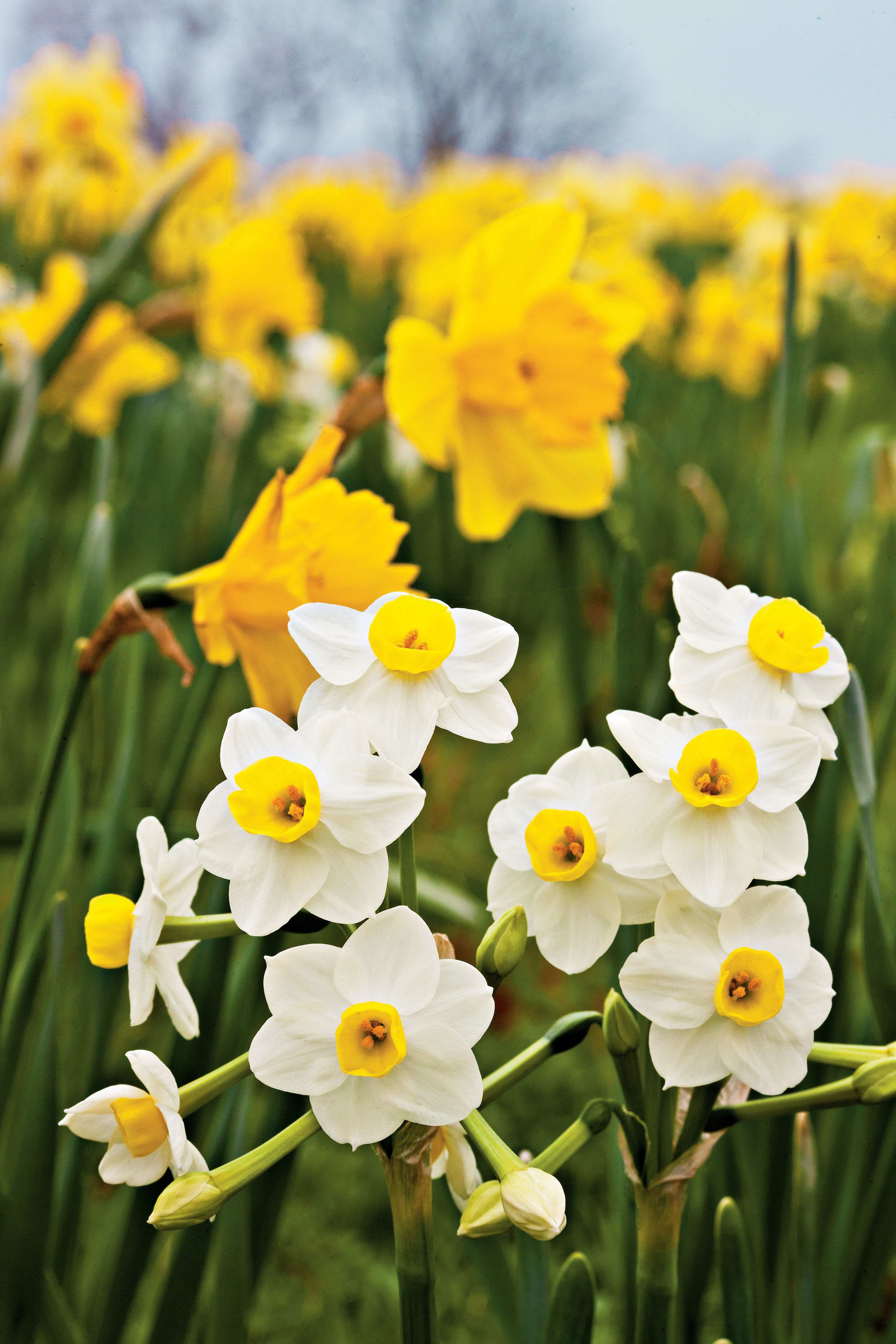 Plantageddon: What to Do to Protect Your Spring Flowers From Frost