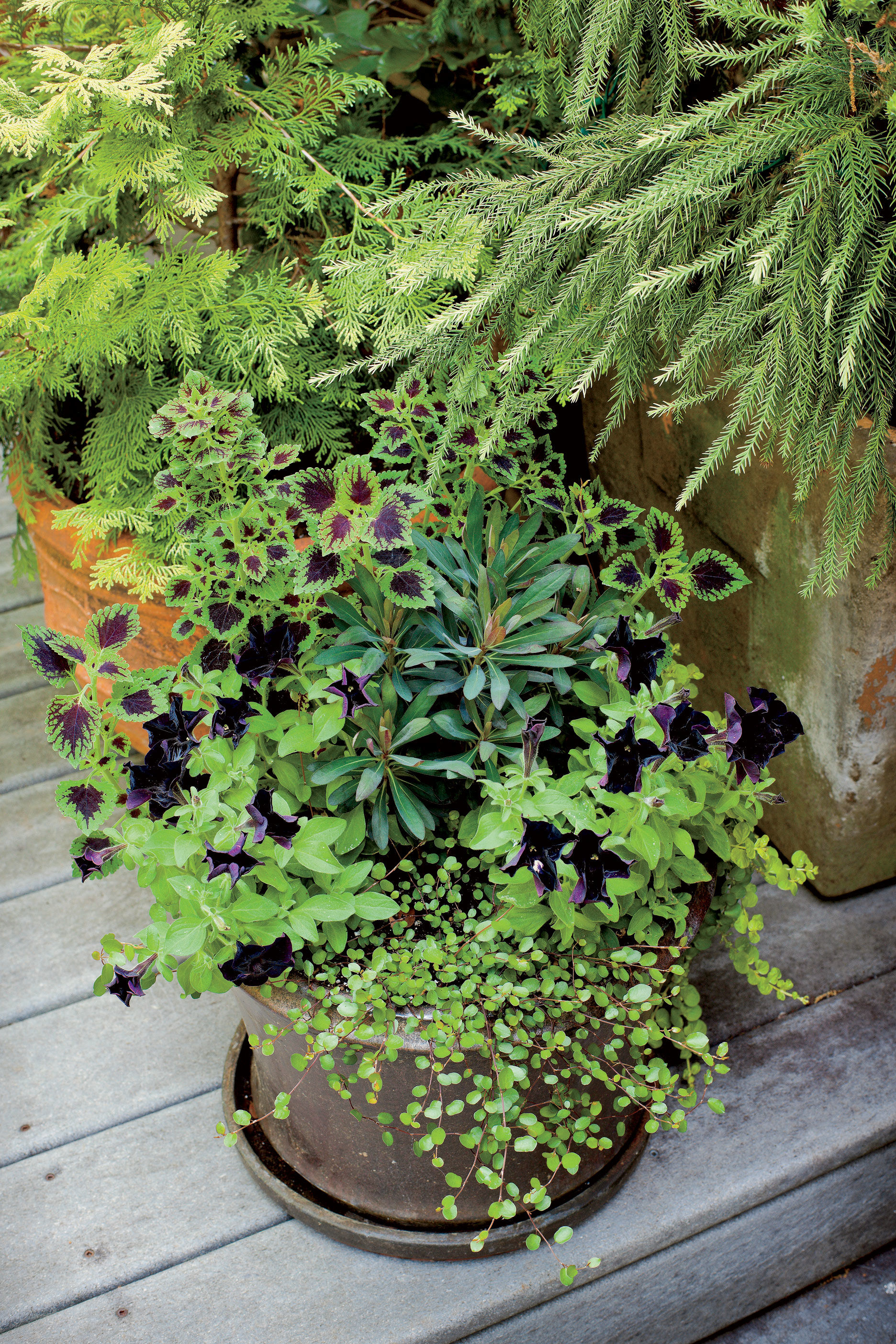 Fall Container Gardening Ideas Southern