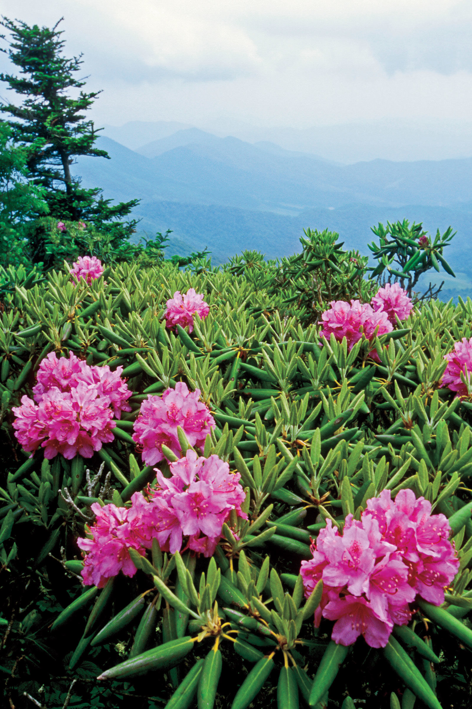 Hike the Revamped Roan Mountain