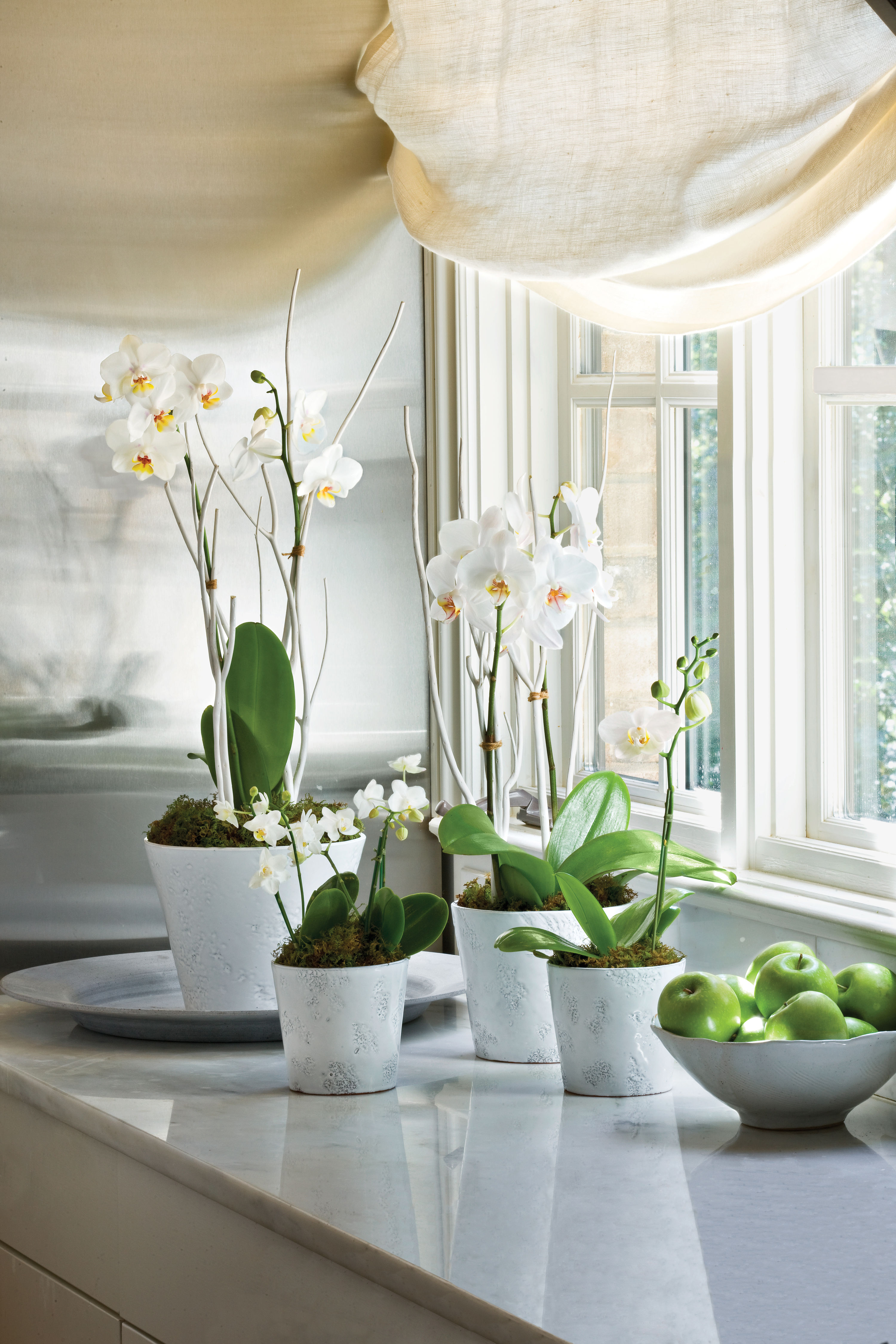 Moth orchids growing guide southern living izmirmasajfo