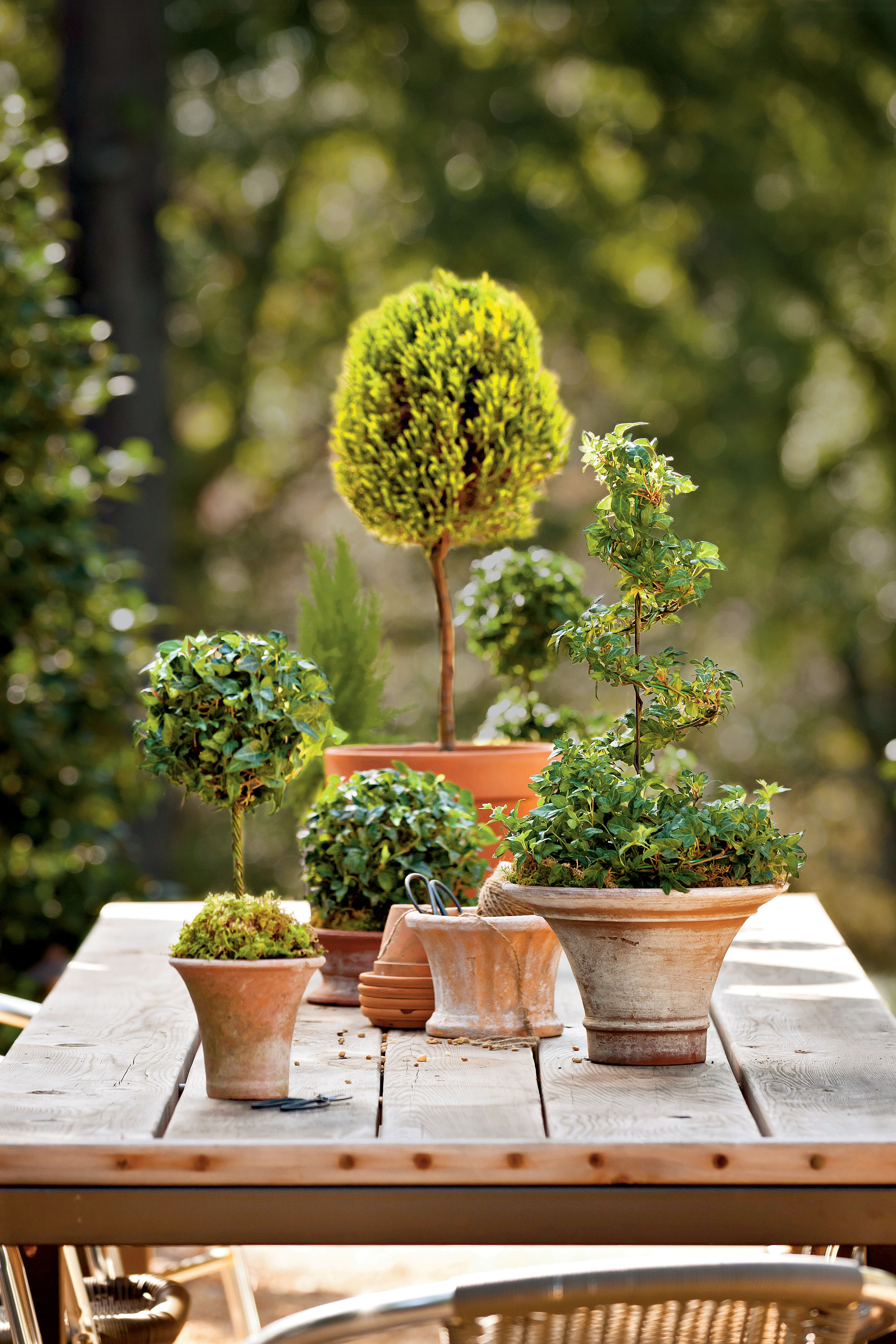 Mix and Match Topiary Display
