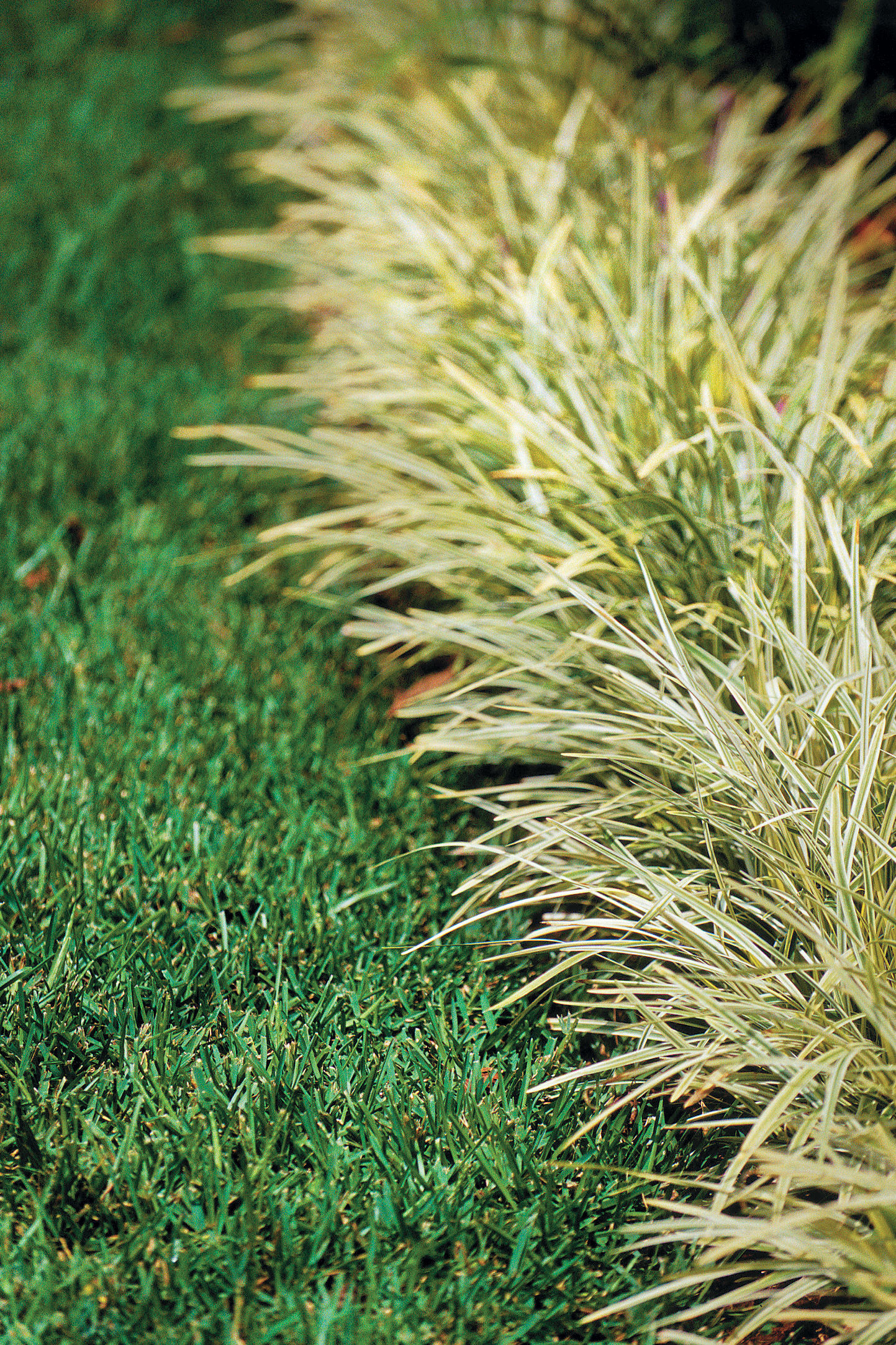 Smart Choices With Monkey Grass Southern Living