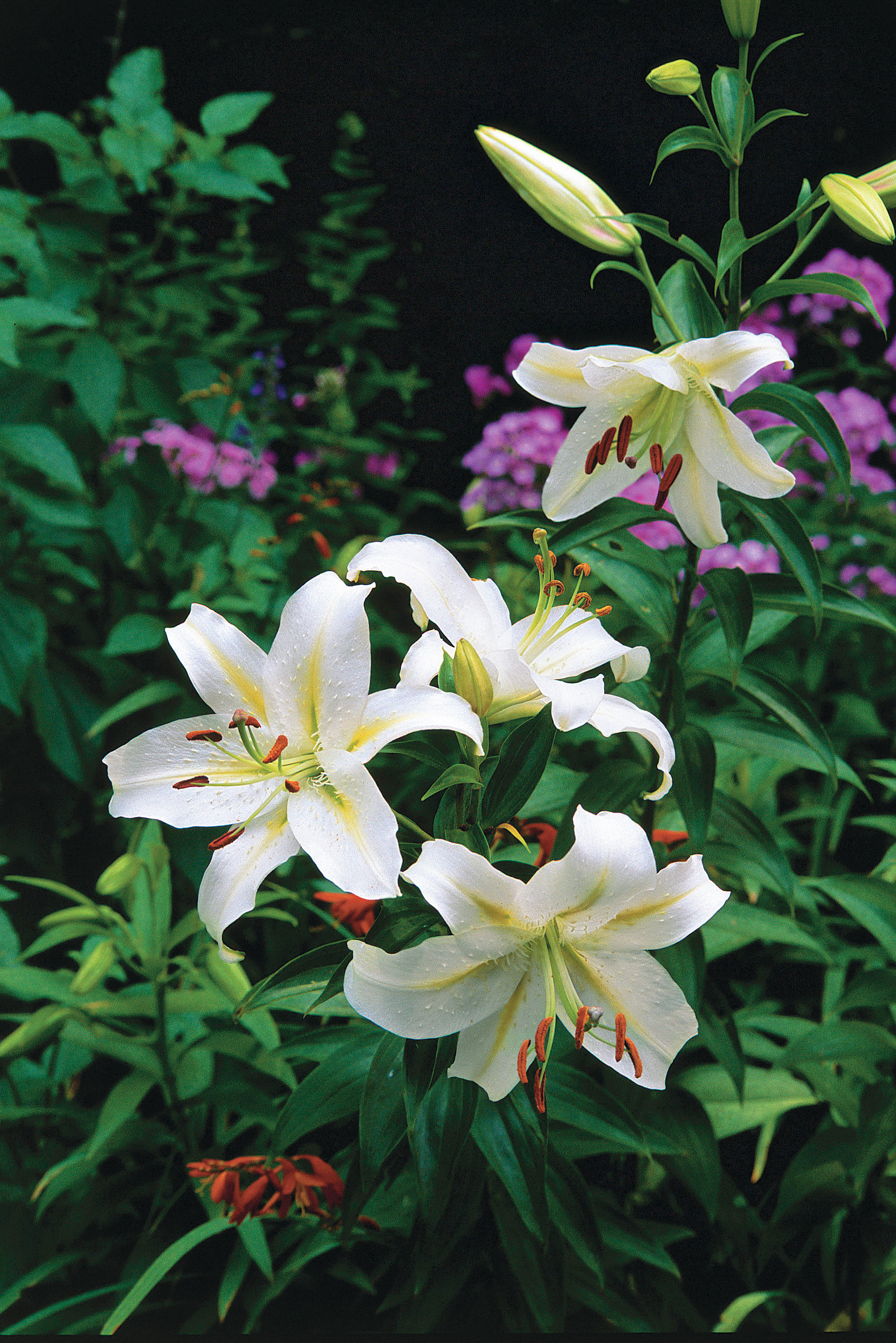 Try These Lovely Lilies