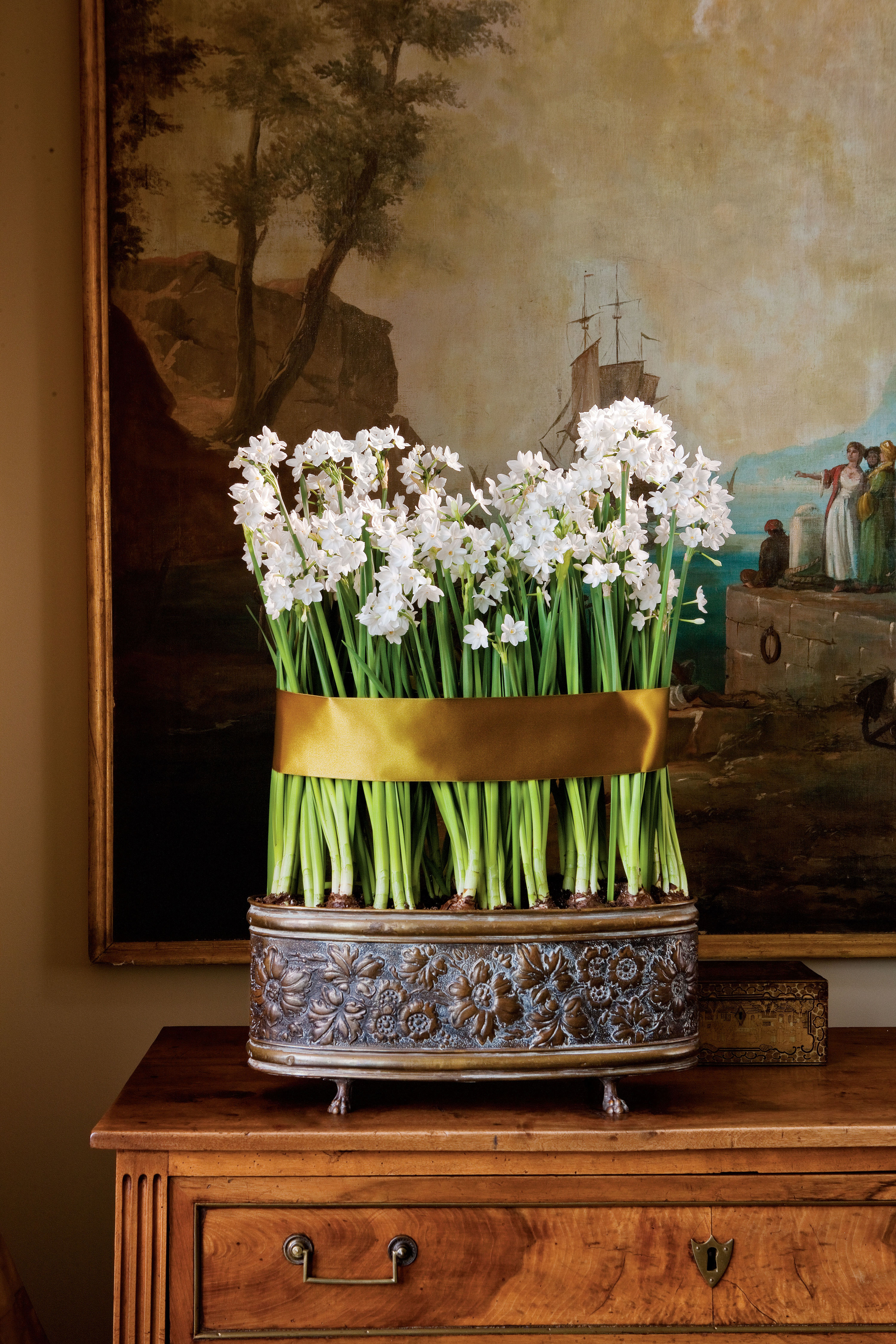 Your Guide to Paperwhites