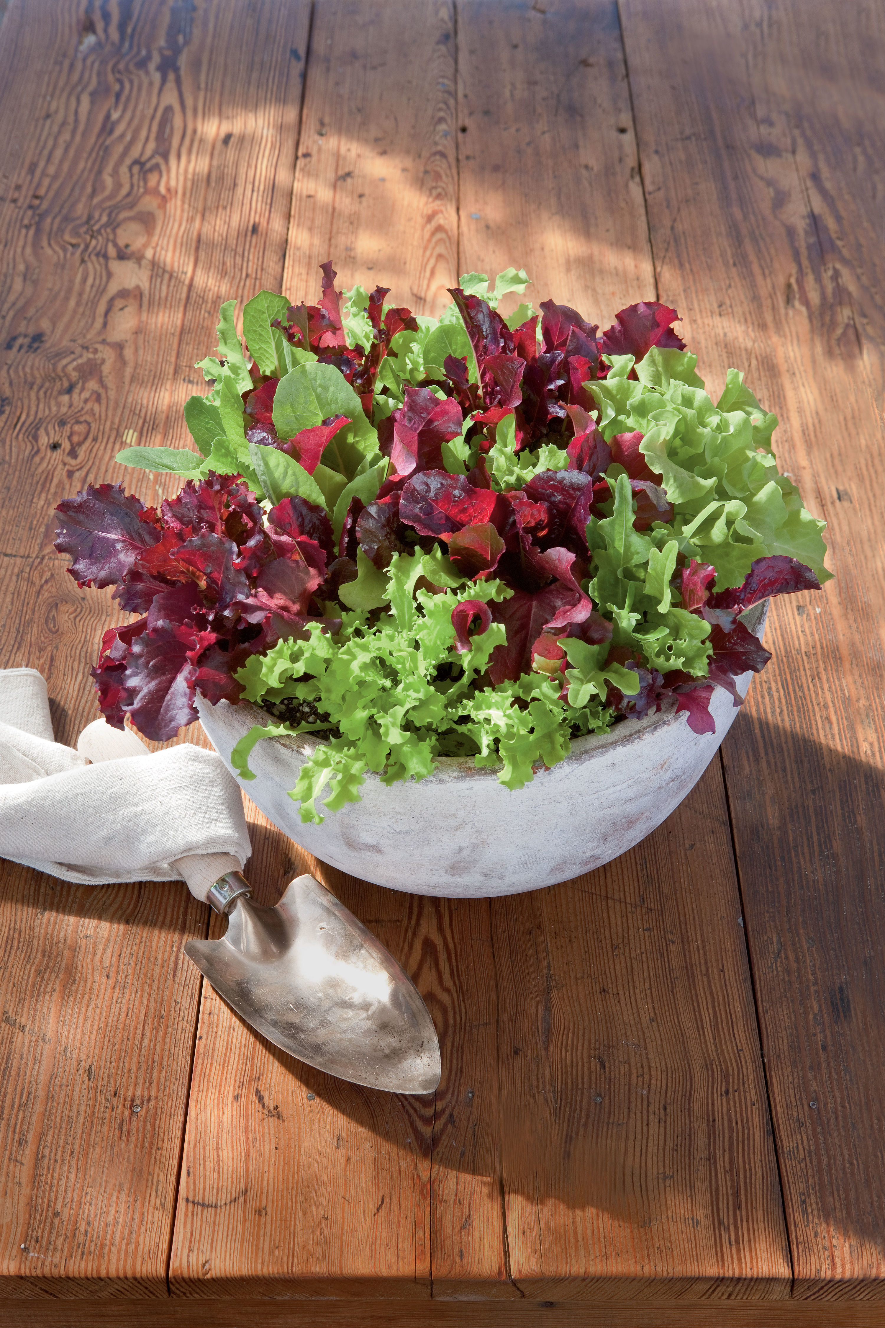 Gardening 101: Growing Fresh Lettuce