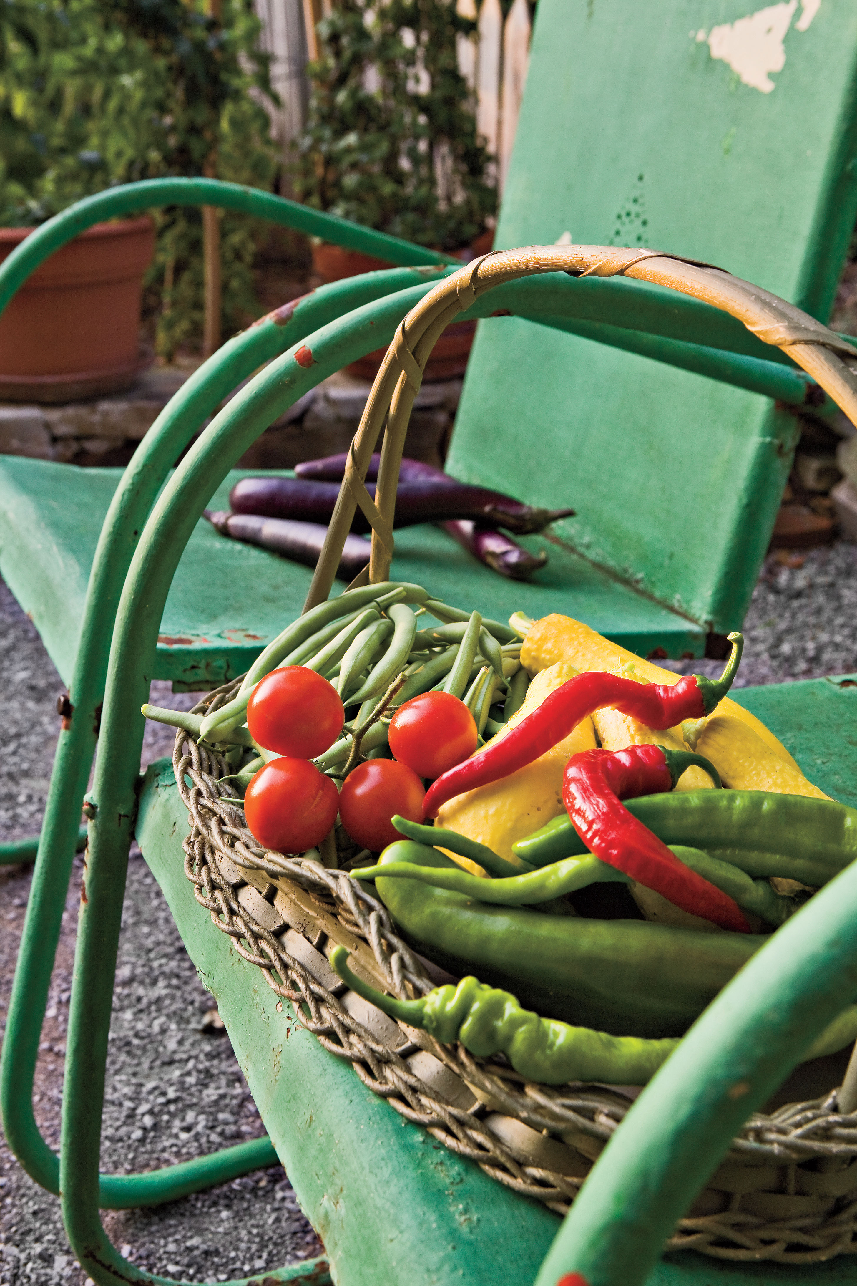 Growing Peppers in Your Garden From Seeds or Transplants