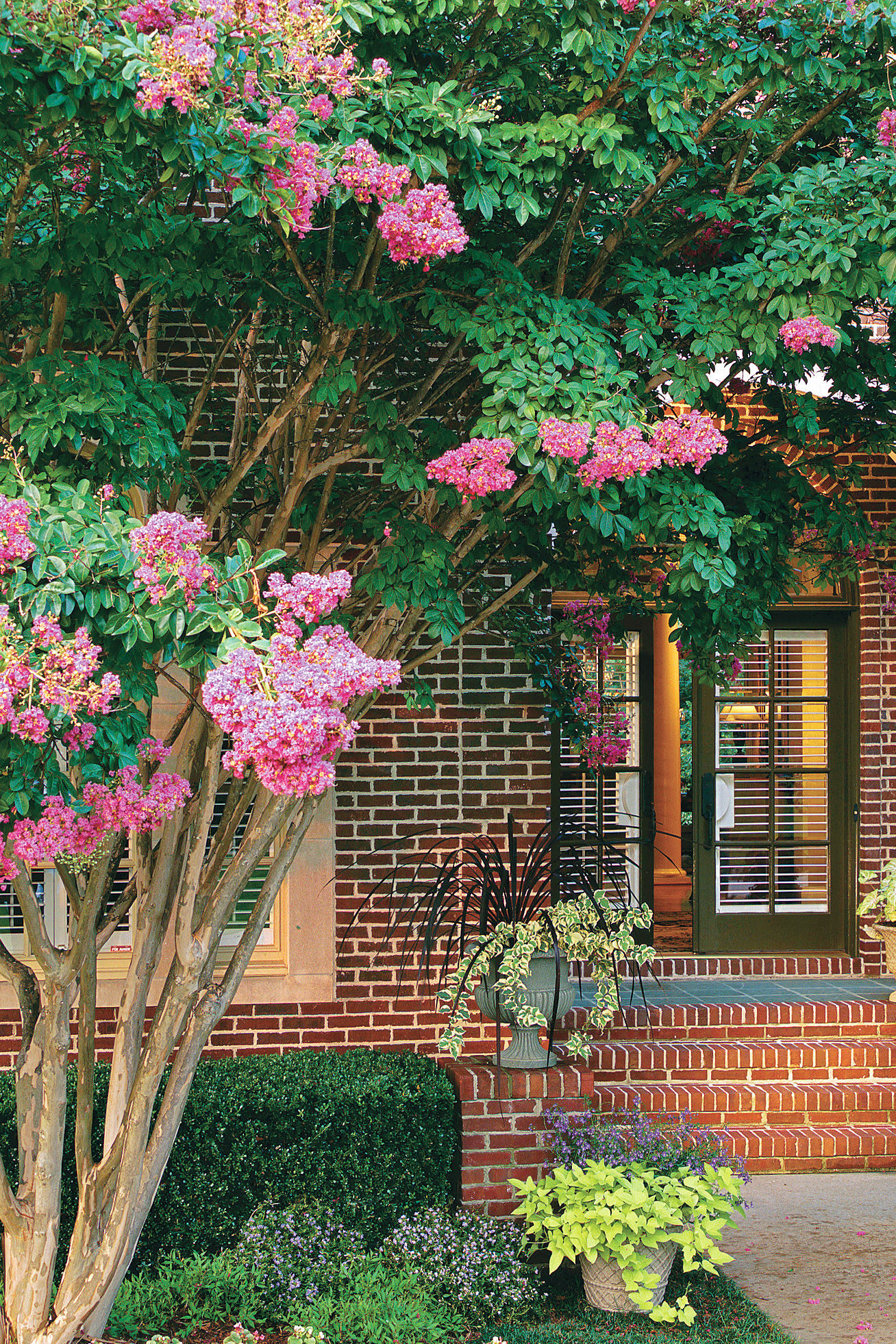 Crepe Myrtles Welcome Summer in the South