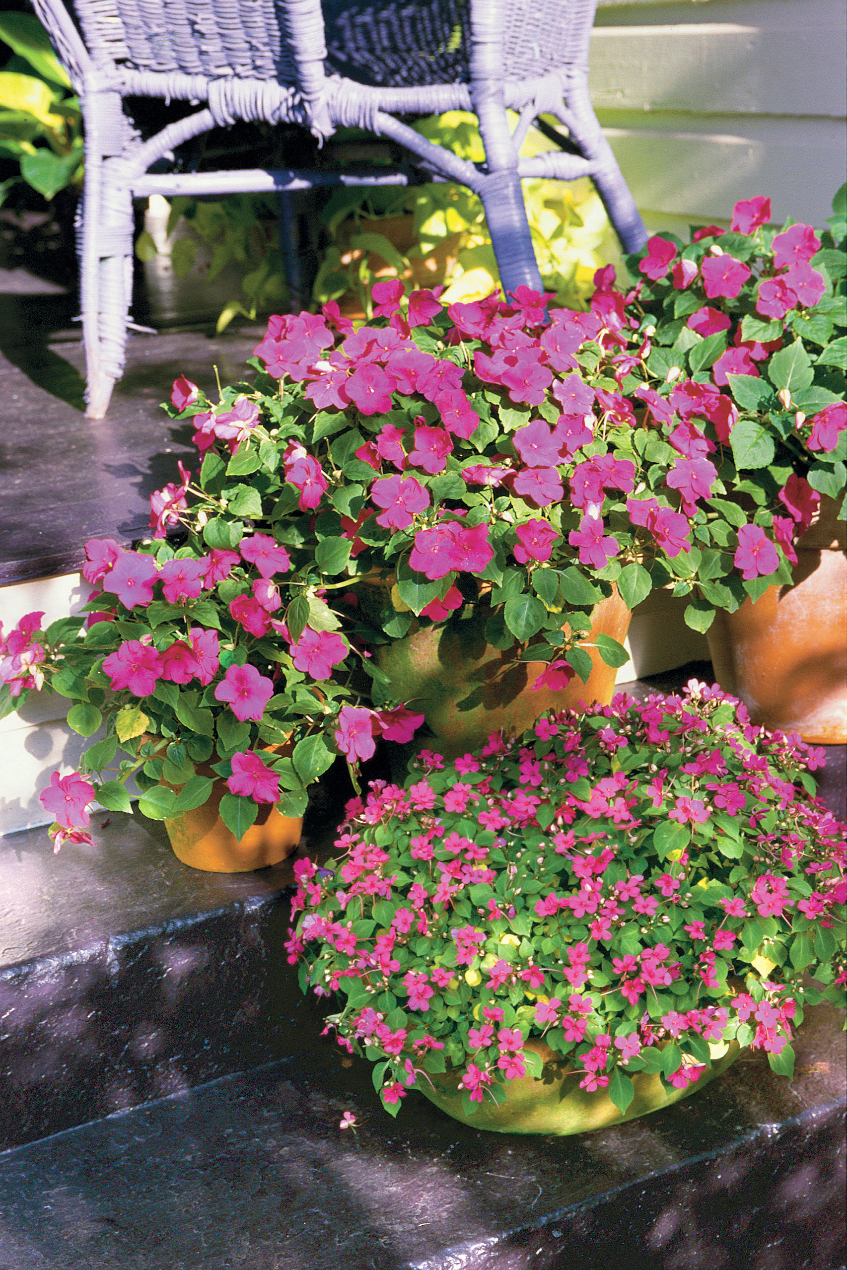 What to Plant in Your Florida Garden in February