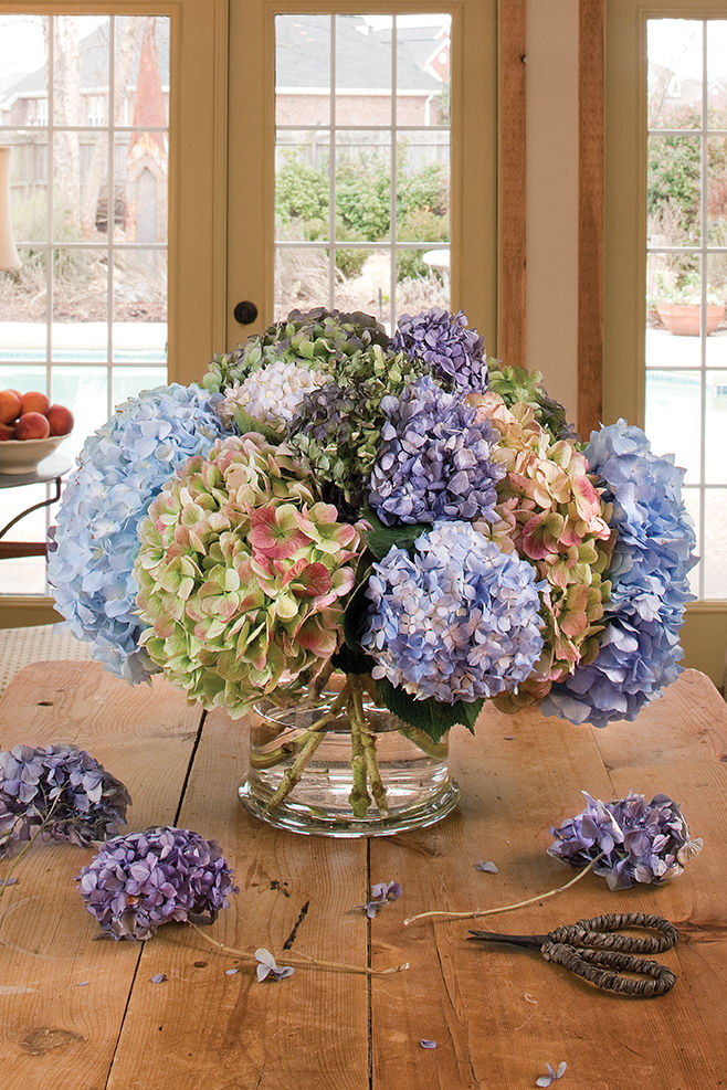 The Secret to Drying Hydrangeas and Other Botanicals