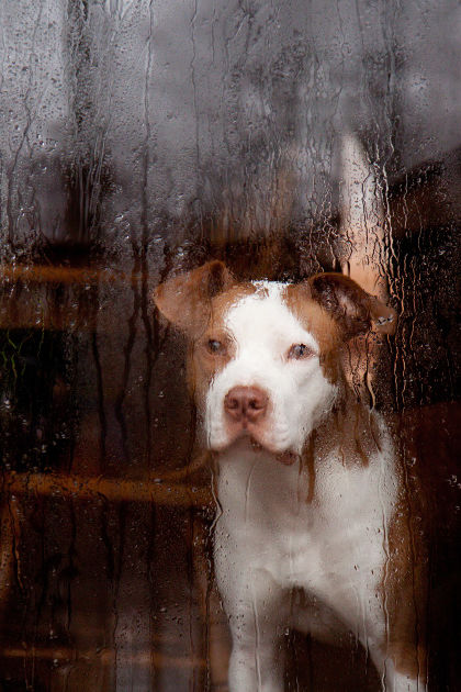 How to Keep Your Pet Safe During a Hurricane