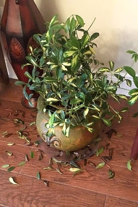 What's Killing My Houseplant?