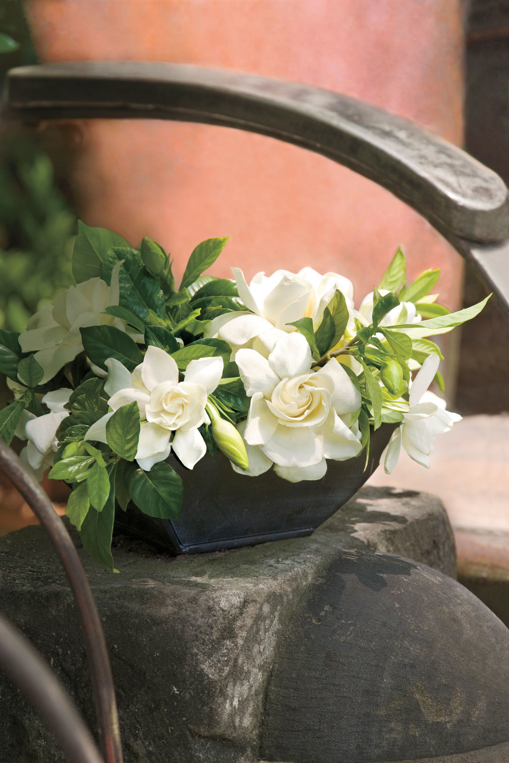 Go Ahead Plant Those Gardenias Southern Living