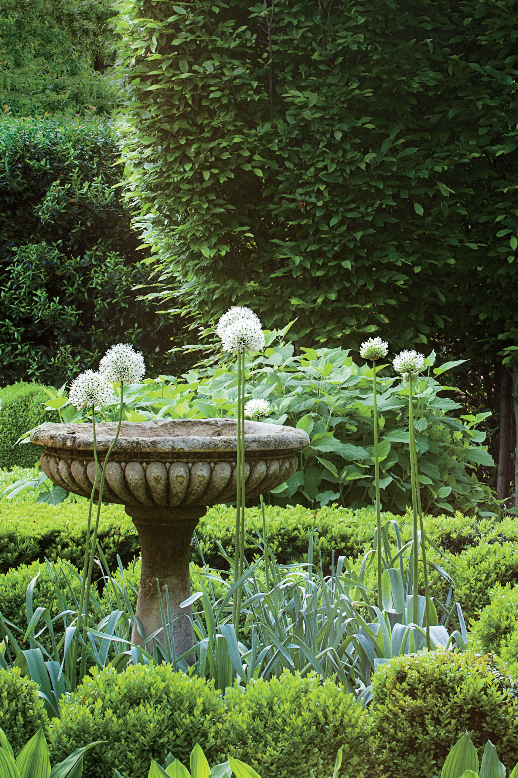 Why We Adore the Elegance of Alliums