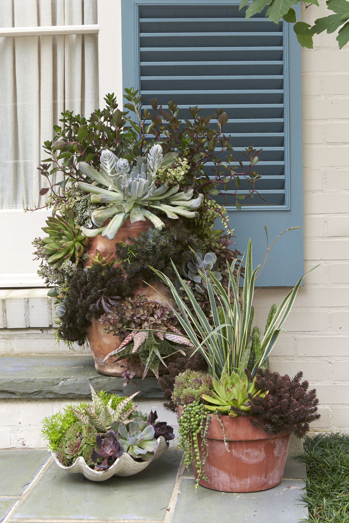 & Heat-Tolerant Container Gardens for Sweltering Summers