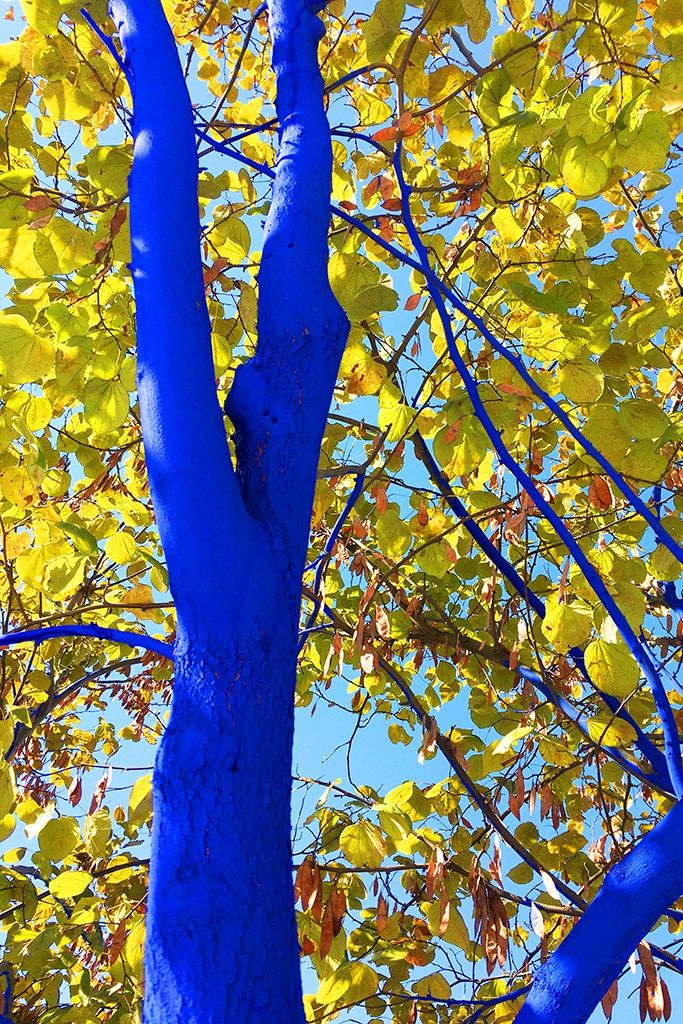 Love The Trees? Paint Them Blue