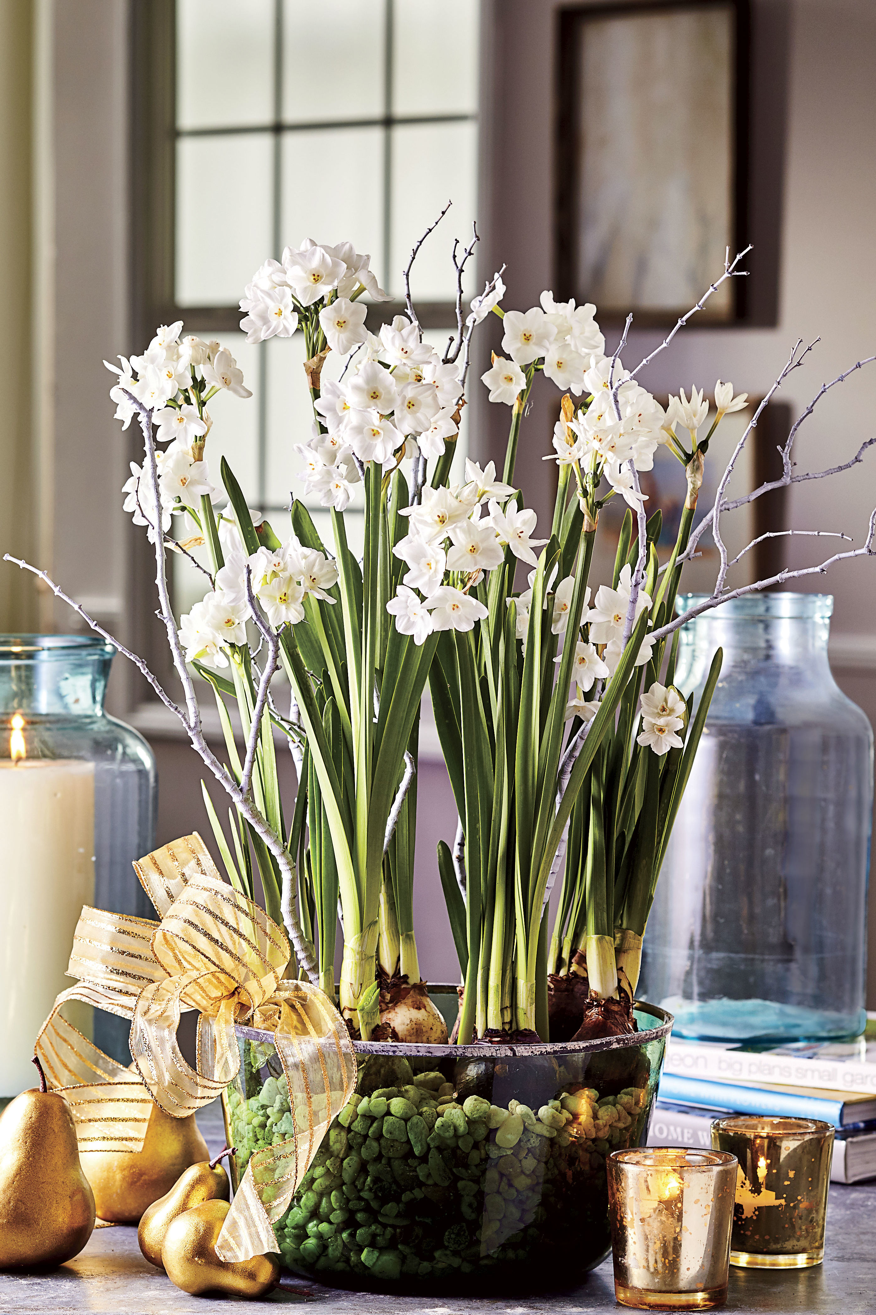 How to Grow Paperwhites