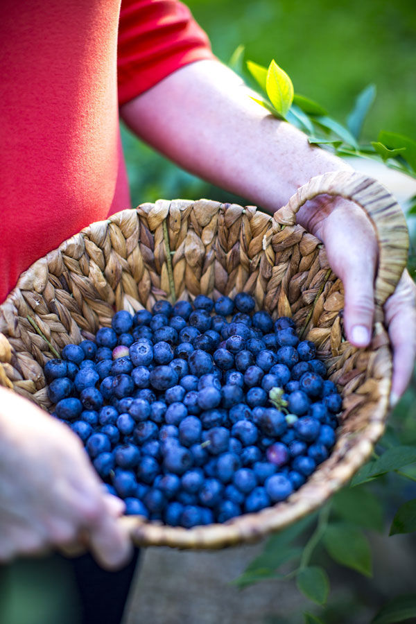 The One Thing My Dad Taught Me About Growing Blueberry Shrubs