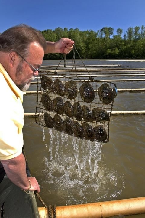 The Only Working Pearl Farm Left in the United States is in Tennessee