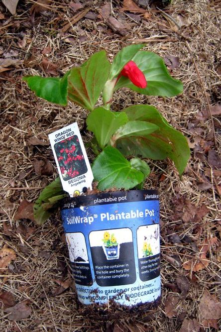 Plantable Pots -- Great Idea That Just Doesn't Work