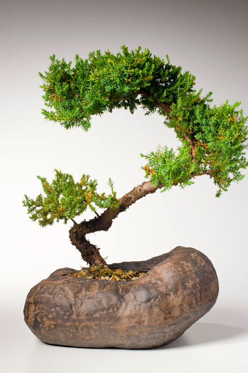 Tiny Trees for Christmas -- Bonsai!