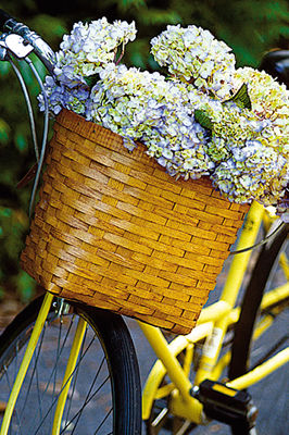 How to Make Hydrangeas Bloom