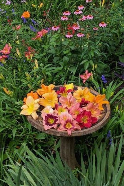 Daylilies Are Easy