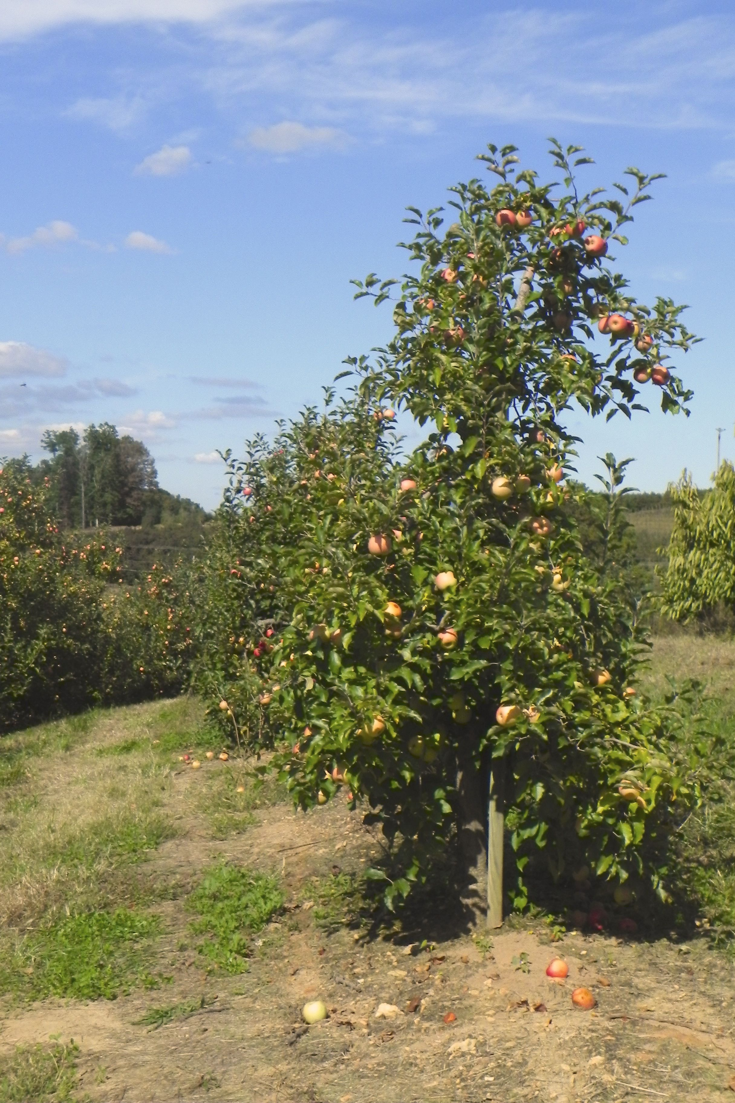 Our Picks for Apple Orchards